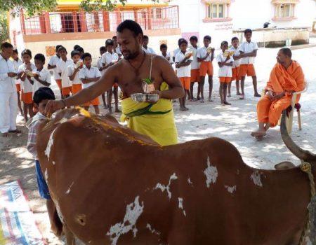 Cow Pooja (Go Seva)